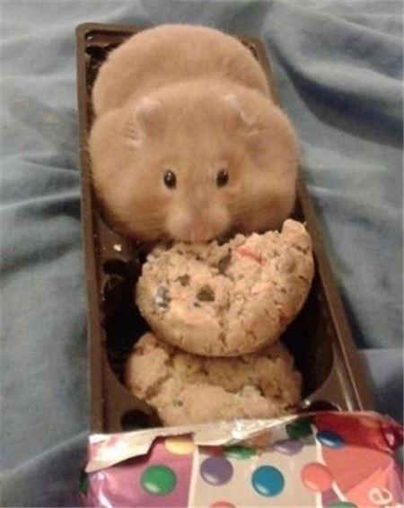 과자인 척하는 쥐 사진 눈길, 정말 과자?