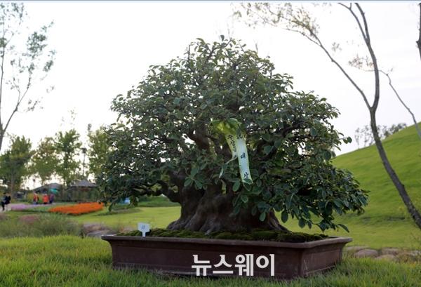 전남도 분재대전 김재열씨 '모과나무' 대상