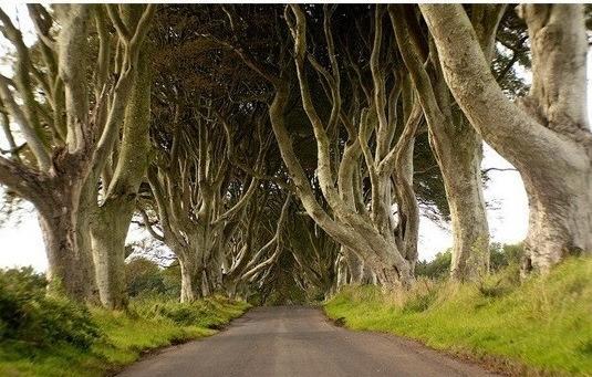 아일랜드 마법의 숲길, 살아있는 듯한 광경에 입이 '쩍'