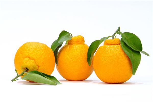 '비타민C 결핍증'…모세혈관 파열할 수도