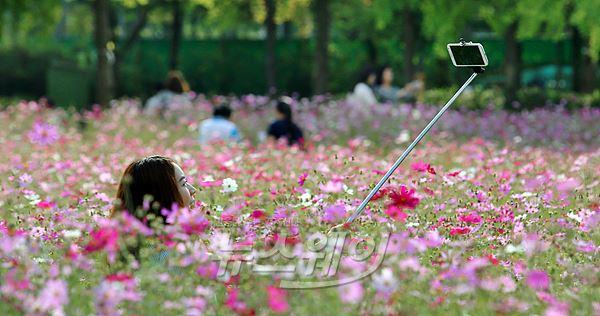 혼자라도 괜찮아 셀카봉 코스모스 꽃 놀이~!