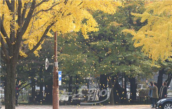 국회에 낙엽비가 秋秋~