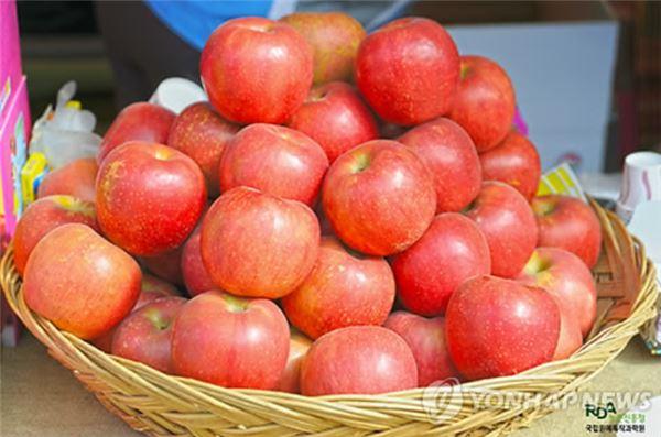 명절 좋은 과일 고르는 법, 사과는 단단하고 감은 얼룩 없어야