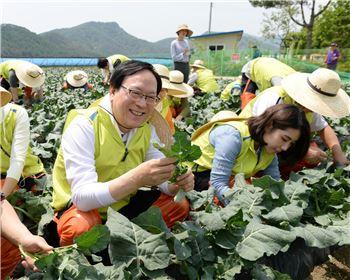 김용환 농협금융 회장, 영농철 맞아 일손돕기에 나서