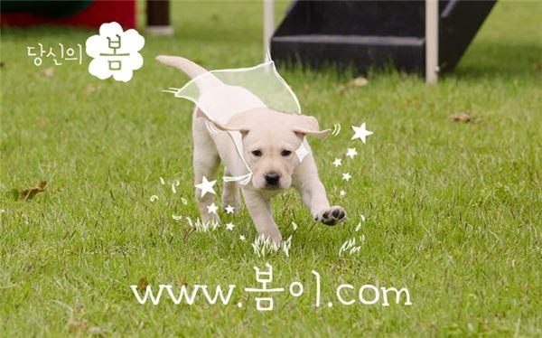 삼성화재, 안전 지키는 강아지 캐릭터 '봄이' 런칭