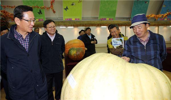 함평군, 160kg 슈퍼 호박 '위용'.