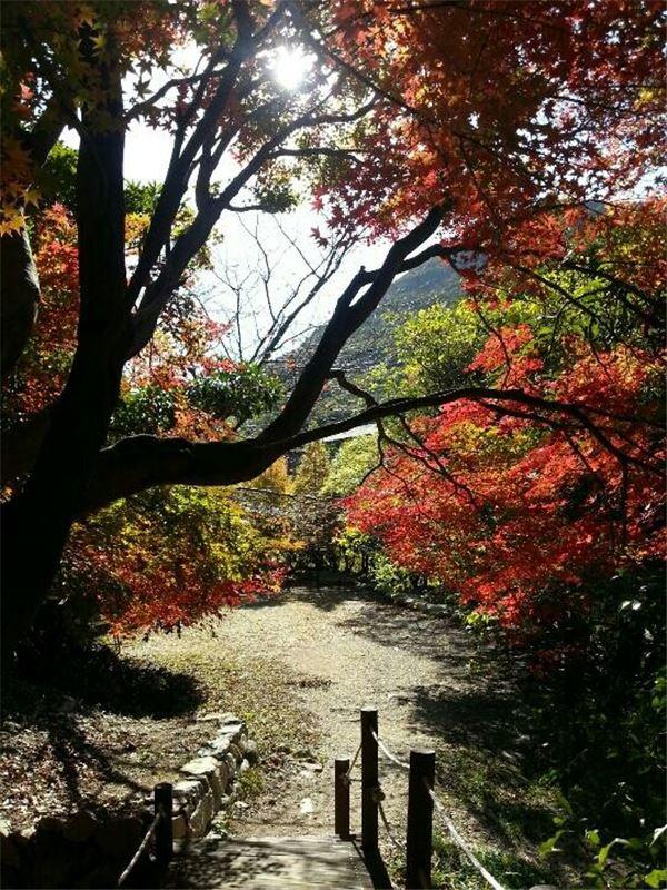 깊어가는 가을 '완도수목원'서 추억 담으세요