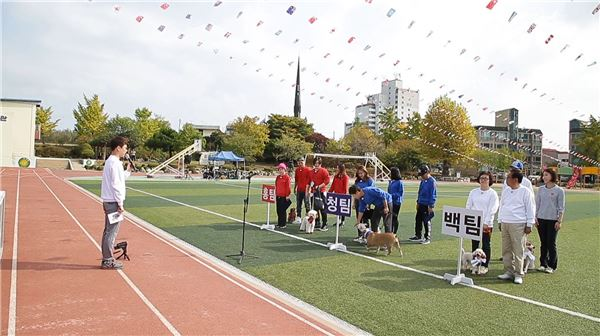 '나를돌아봐' 조영남 모교서 운동회 개최… 평균나이 62세