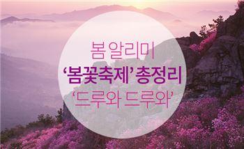 봄 알리미 '봄꽃축제' 총정리…'드루와 드루와'