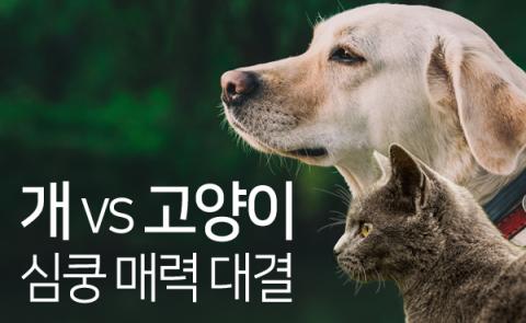 개 vs 고양이, 심쿵 매력 대결