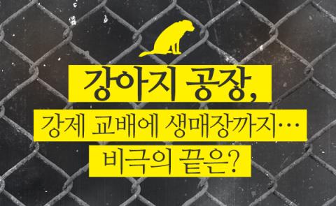 강아지 공장, 강제 교배에 생매장까지…비극의 끝은?