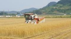 고흥군, 세계 10대 슈퍼푸드 '쌀 귀리' 본격 수확