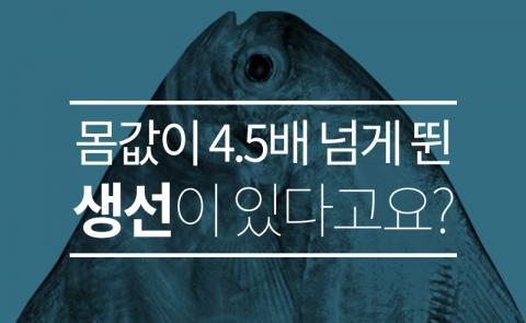 몸값이 4.5배 넘게 뛴 생선이 있다고요?