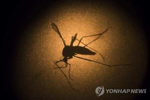 말레이시아서 '지카 바이러스' 감염 30대 남성 사망