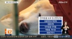 반려동물 신산업으로 육성…강아지 번식 공장 사례 막는다