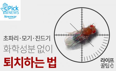 초파리·모기·진드기, 화학성분 없이 퇴치하는 법