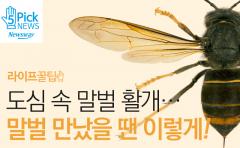 도심 속 말벌 활개…말벌 만났을 땐 이렇게!