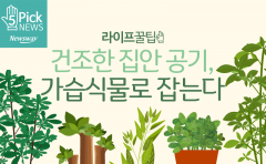 건조한 집안 공기, 가습식물로 잡는다