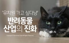 '유치원 가는 고양이'…반려동물 산업의 진화