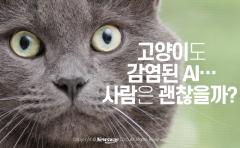 고양이도 감염된 AI…사람은 괜찮을까?