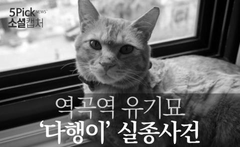 역곡역 유기묘 '다행이' 실종사건