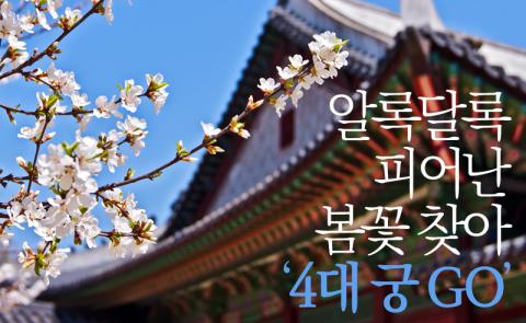 알록달록 피어난 봄꽃 찾아 '4대 궁 GO'