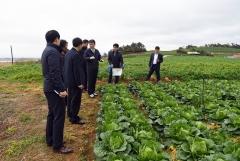 aT, 봄배추 생산과잉 대비 긴급 수매