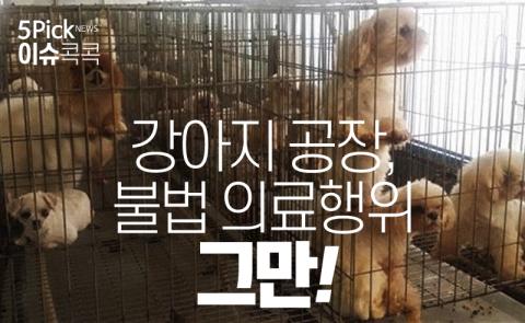 강아지 공장, 불법 의료행위 그만!