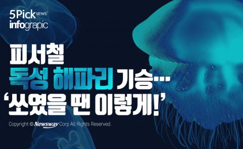 피서철 독성 해파리 기승…'쏘였을 땐 이렇게!'
