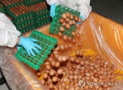 식약처, '살충제 계란' 유해평가·폐기현황 발표