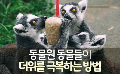 동물원 동물들이 더위를 극복하는 방법