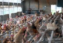 경북 농장 2곳 닭에서 DDT 검출…이전에 과수원으로 사용된 영향인듯