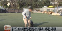 """경기도 """"무게 15kg 이상 반려견 입마개 의무화…목줄 길이 2m 제한"""""""