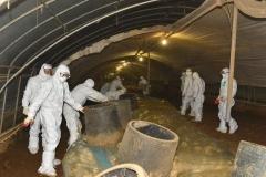 고창 오리농가 고병원성 AI 바이러스 확진…위기경보단계 격상