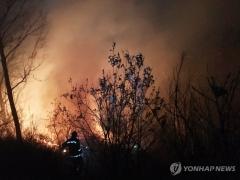 연중 3월 산불 가장 많이 발생…건조한 날씨가 원인