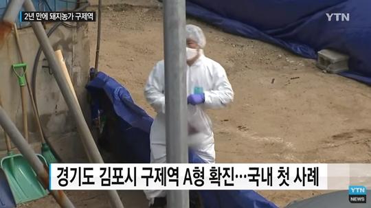 김포 돼지농장 구제역 A형 확진…국내 첫 사례, 48시간 이동중지
