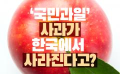 '국민과일' 사과가 한국에서 사라진다고?