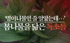 쌍둥이 같은 봄나물-독초 '헷갈리지 마세요'