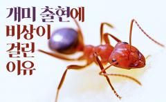 [카드뉴스]개미 출현에 비상이 걸린 이유