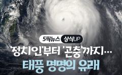 [상식 UP 뉴스]'정치인'부터 '곤충'까지···태풍 명명의 유래