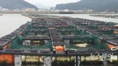 신안군, 양식장 고수온 피해예방...선제적 대응 '총력'
