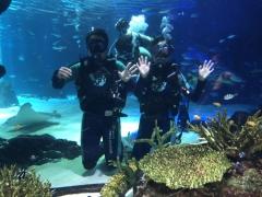 아쿠아플라넷63, 무료체험 다이빙ㆍ63아트 작가와의 만남 준비