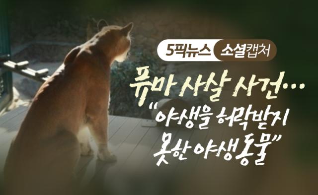 """퓨마 사살 사건…""""야생을 허락받지 못한 야생동물"""""""