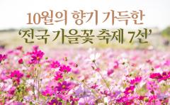10월의 향기 가득한 '전국 가을꽃 축제 7선'