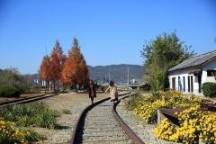 가을향 물씬, 국화꽃이 반겨주는 남원 서도역