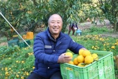 전남 고흥 박태화 명인, 유자 유기농 재배로 연소득 2억 6천만 원