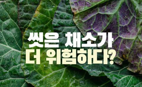 씻은 채소가 더 위험하다?