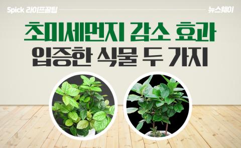 초미세먼지 감소 효과 입증한 식물 두 가지