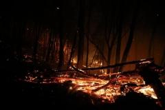포항 또 산불…두호동 철미산서 화재 진화 중