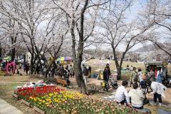 의왕시, 벚꽃축제 마무리…시민노래자랑 등 다양한 무대 선보여